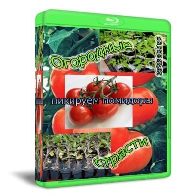Скачать с letitbit Огородные страсти: Пикируем помидоры (2011) SATRip