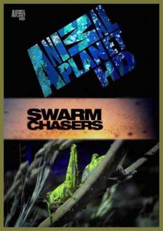 Скачать с letitbit Animal Planet: В погоне за стаей. Саранча / Swarm Chaser ...