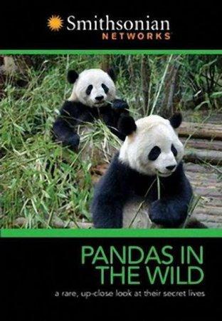 Скачать фильм Гигантская панда (Панды на свободе) / Giant Panda (Pandas in  ...