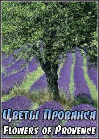 Скачать с letitbit Цветы Прованса / Flowers of Provence (2008)