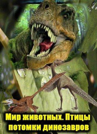 Скачать с letitbit Мир животных. Птицы потомки динозавров / Animal Explorat ...