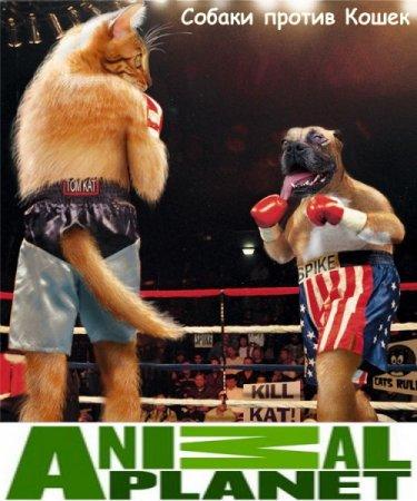 Скачать с letitbit Собаки против кошек / Dogs Vs Cats (2010)