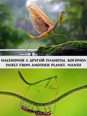 Скачать с letitbit Инопланетное насекомое. Богомол (2012)