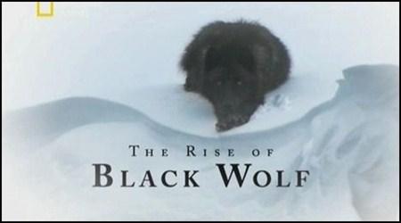 Скачать с letitbit  Восхождение чёрного волка / The Rise of Black Wolf (201 ...
