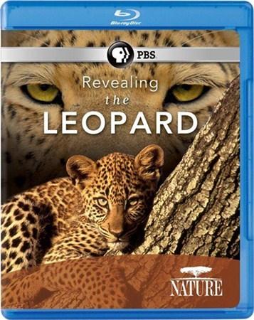 Скачать с letitbit  Тайная жизнь леопарда / PBS: Nature - Revealing the Leo ...