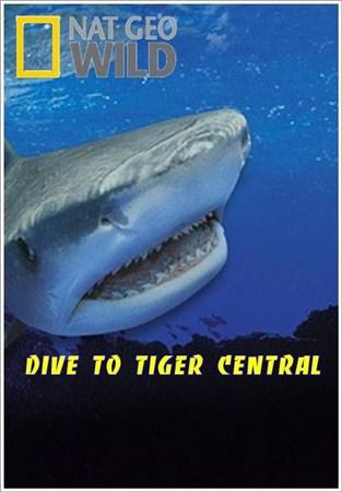 Скачать с letitbit  Погружение в царство тигровых акул / Dive to Tiger Cent ...