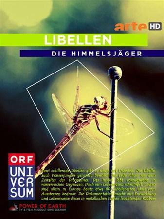 Скачать с letitbit  Небесные охотники. Мир стрекоз / Libellen - Die Himmels ...