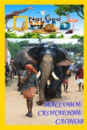 Скачать с letitbit  Массовое скопление слонов / The Great Elephant Gatherin ...