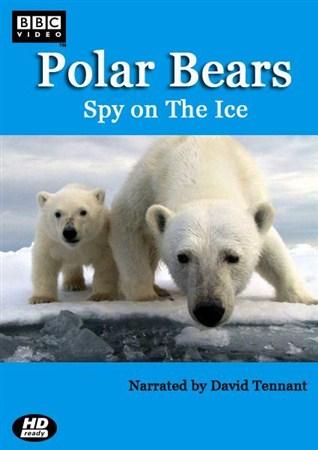 Скачать с letitbit  Белый медведь - Шпион во льдах / Polar Bear - Spy on th ...