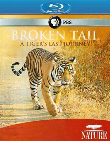 Скачать с letitbit  Сломанный хвост: Последнее путешествие тигра / PBS: Nat ...