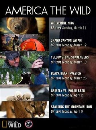 Скачать с letitbit  Дикая Америка: Гризли против белого медведя (2012) HDTV ...