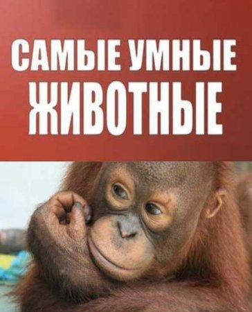 Скачать с letitbit Самые умные животные (2012)