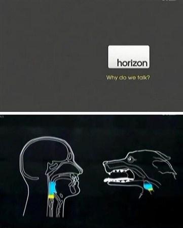 Скачать с letitbit  BBC. Horizon: Почему мы говорим? / Why do we talk? (201 ...