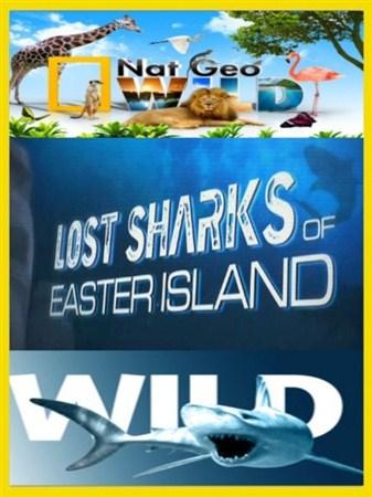 Скачать с letitbit Потерянные акулы острова пасхи / Lost Sharks of Easter I ...