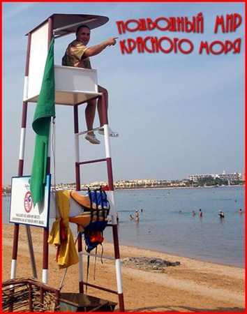 Скачать с letitbit  Подводный мир Красного моря. Египет (2009) DVDRip