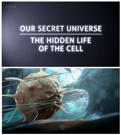 Скачать с letitbit  Внутренняя Вселенная: Тайная жизнь клетки / Secret Univ ...