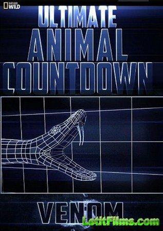 Скачать с letitbit  Животные-рекордсмены: Яд / Ultimate Animal Countdown: V ...