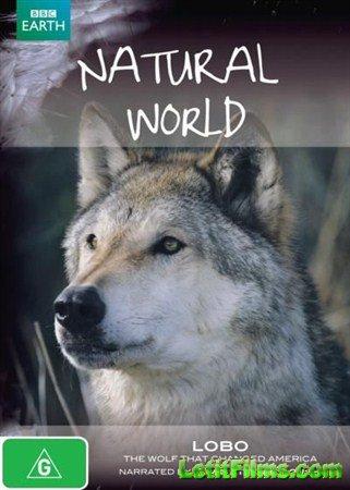 Скачать с letitbit  BBC. Мир природы. Лобо: Волк, который изменил Америку ( ...