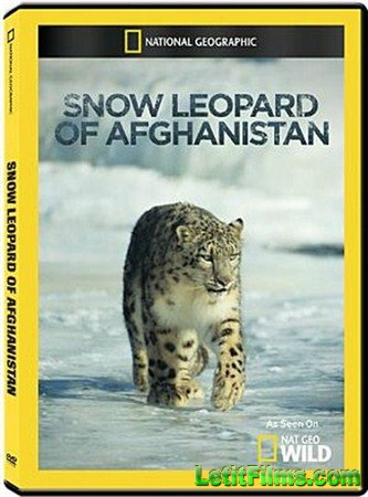 Скачать с letitbit  National Geographic: Снежный барс Афганистана / National Geographic: Snow Leopard of Afghanistan (2012 ) HDTV (1080i)
