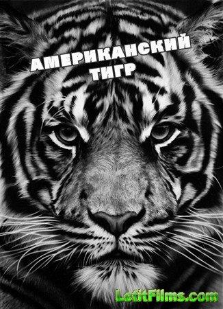 Скачать с letitbit  Американский тигр / American Tiger (2012 ) HDTV (1080i)