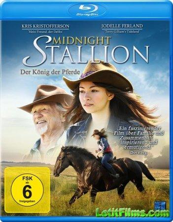 Скачать с letitbit Полночный жеребец / Midnight Stallion (2013)