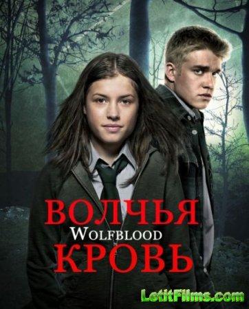 Скачать сериал Волчья кровь - 3 сезон (2014)