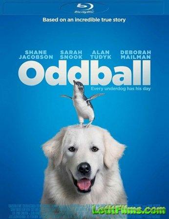 Скачать фильм Чудак / Oddball (2015)