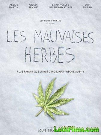 Скачать фильм Плохие семена / Les mauvaises herbes (2016)
