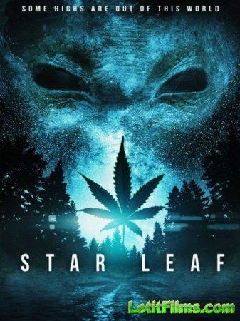 Скачать фильм Звездная травка / Star Leaf (2016)