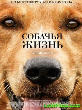 Скачать фильм Собачья жизнь / A Dog's Purpose (2017)