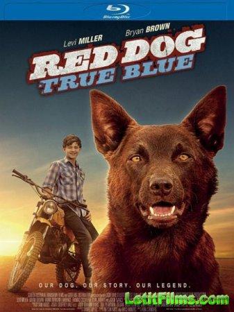 Скачать фильм Рыжий: вся правда / Red Dog: True Blue (2016)