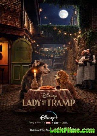 Скачать фильм Леди и Бродяга / Lady and the Tramp (2019)